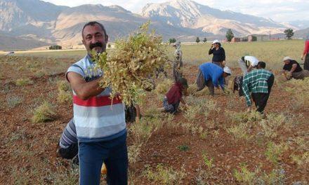 Communist Party of Turkey (TKP) Wins Dersim Province in Local Elections